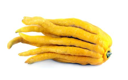 Buddhas hand lemon on a white background. Unusual citrus fruit from Asia.
