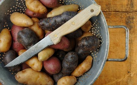 fingerling: Variety of fingerling potatoes with a knife in a colander.