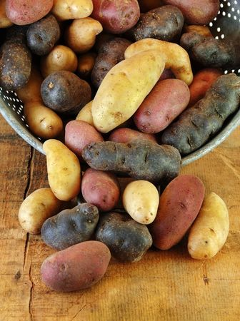 fingerling: Variety of fingerling potatoes spilling out of a collander. Stock Photo