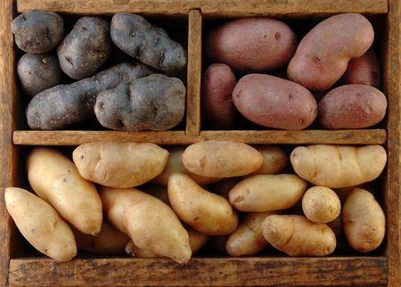 fingerling: Wooden box filled with different colored fingerling potatoes.