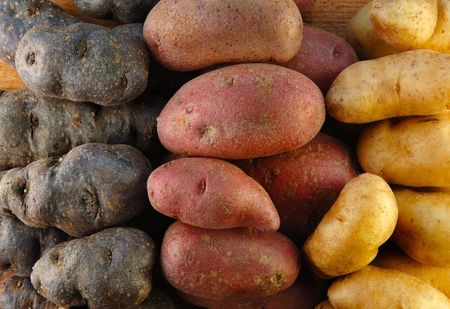Three colors of fingerling potatoes. Stock Photo - 6728200