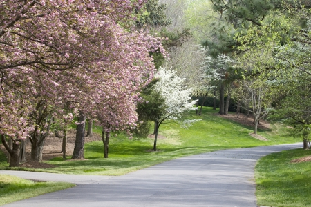 Spring Driveway photo