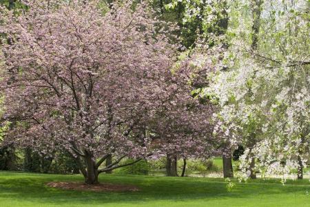 North Carolina Trees in Spring Bloom Stock Photo - 17329993