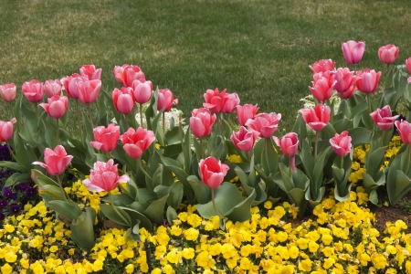 Spring Blooms Stock Photo - 17374197