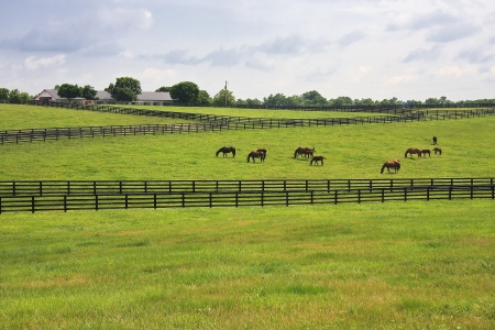 Horse Farm Stock Photo - 17441166