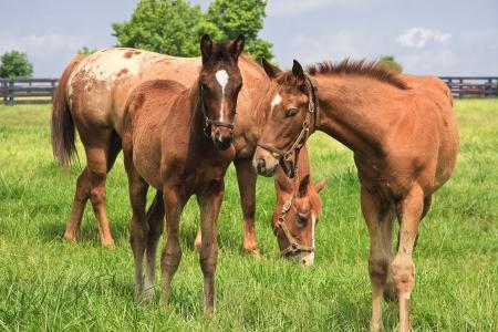 Cute horses photo