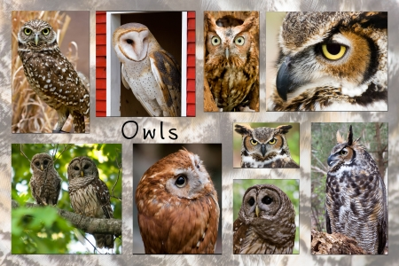 Owl Collage Stock Photo - 17472655