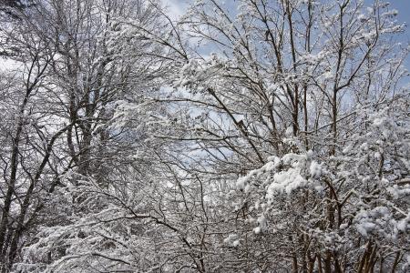 Snowy Trees Stock Photo - 17510435