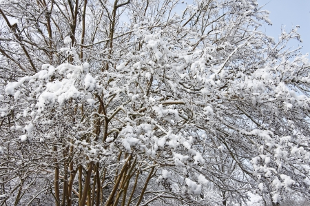 Winter Trees Stock Photo - 17510434