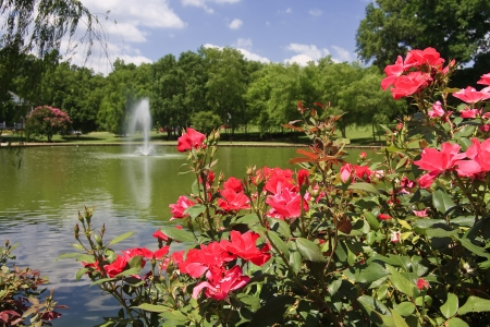 Freedom Park Rose Garden Stock Photo