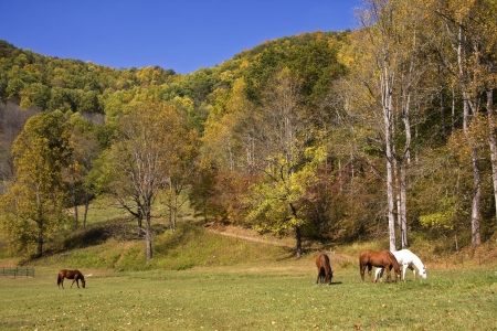 Horses in a Field with Mountain Background photo