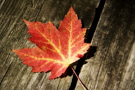 Fall Maple Leaf on Boards Stock Photo - 17625685