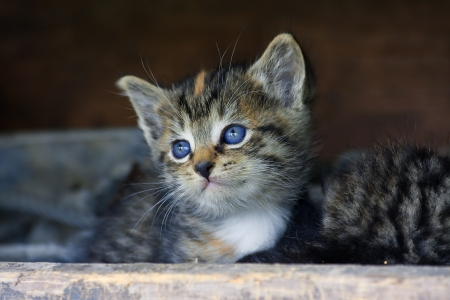 Cute Kitten Face photo