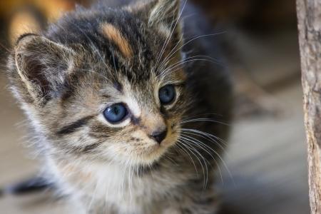 Kitten Face photo