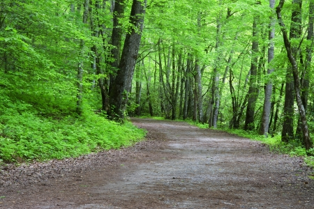 wooded path: Deep Creek Path and Trails