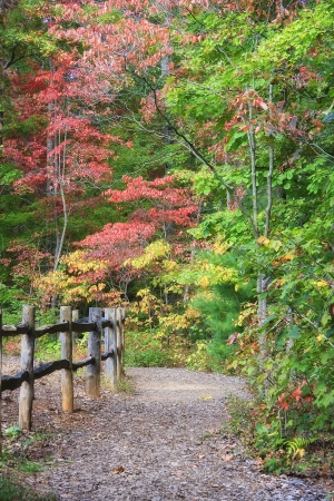 walking trail: Walking Trail in autunno con la rete fissa Archivio Fotografico
