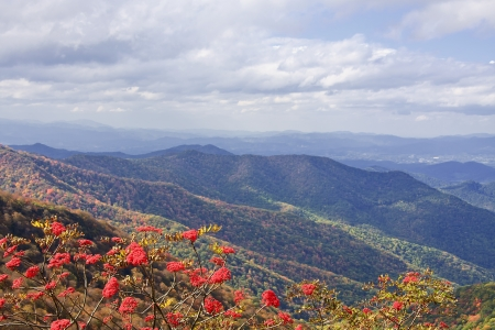 craggy: Craggy Gardens and Mountain Ash Berries in NC