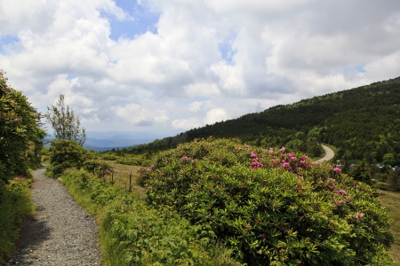Roan Mountain Path photo