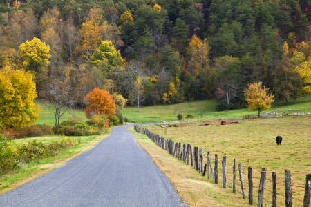 cattle wire: Cow Pasture by the Road