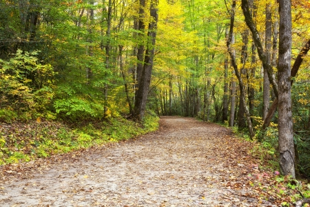 forest path: Pathway at the Deep Creek Area