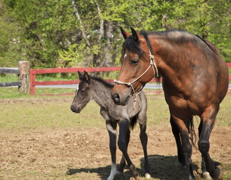Mother Horse and Very Young Colt