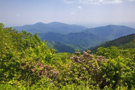 Laurel Blooming in the North Carolina Mountains Stock Photo - 17973104
