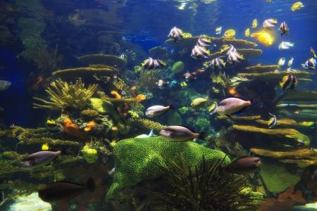 Rainbow Rock at the Aquarium Stock Photo - 18029738