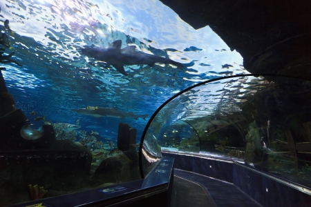 Aquarium Tunnel photo