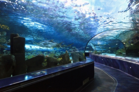 Ripley s Aquarium Dangerous Reef in Myrtle Beach, SC Stock Photo - 18029743
