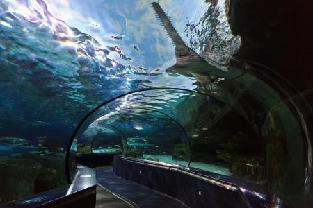 Ripley s Aquarium in Myrtle Beach, SC Stock Photo - 18029737