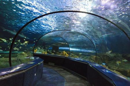 aquarium visit: Ripley s Aquarium Dangerous Reef in SC