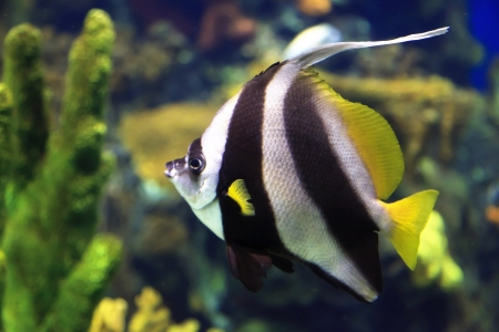 Salt Water Fish in an Aquarium photo