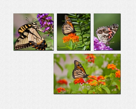 swallowtails: Butterfly Collage