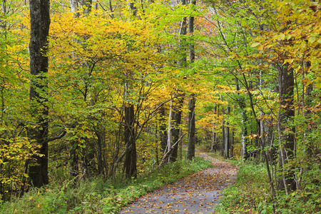 A paved trail at the Cherohala Skyway overlook in the Fall