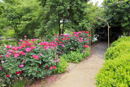 path to romance: McGill Rose Garden path and trellis in Charlotte, North Carolina