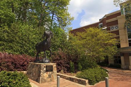 unc: Ramses The Bighorn Ram at Chapel Hill