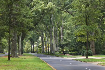 Queens Road West in Myers Park in the summer with tall Willow Oaks Stock Photo