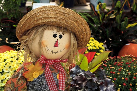 autumn scarecrow: Cute scarecrow doll decoration among some mums and plants