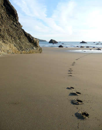 Dog footprints track along a sandy beach to the shore