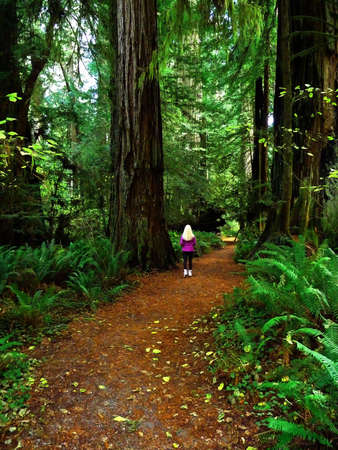 healthy path: Girl walking alone down the path in the redwood forest Stock Photo