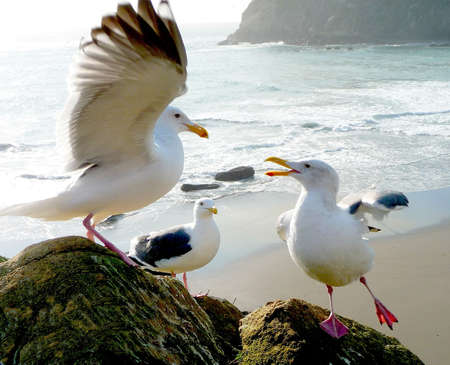 Animated seagulls performing on rock