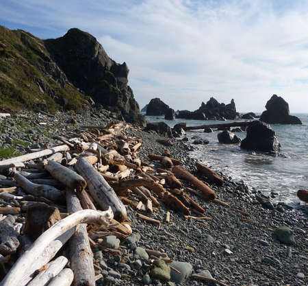 sun  soaked: A large piece of driftwood washed up on a gravel beach Stock Photo