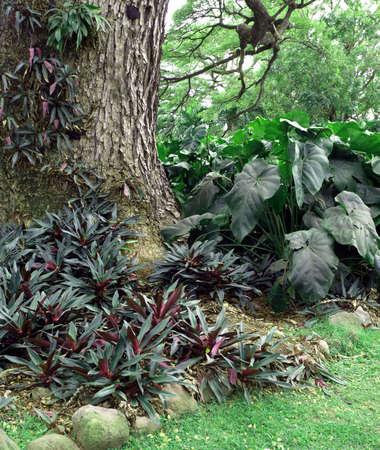 Lush green foliage around a tree trunk on a tropical island Stock Photo - 4589274