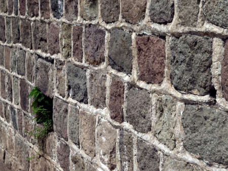 Green foliage springs to life through stone and rock wall