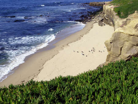 View of birds on beach along Pacific ocean from lush landscaped bluff