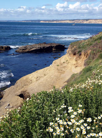 Daisies on green landscaped bluff overlooking Pacific ocean  Reklamní fotografie