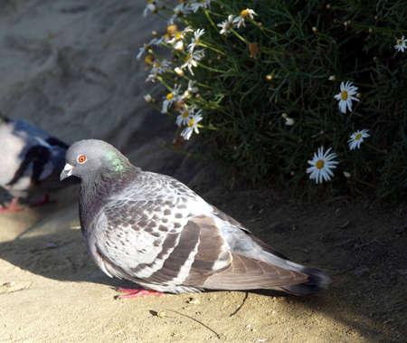A bird sits in a resting pose on the sand Reklamní fotografie
