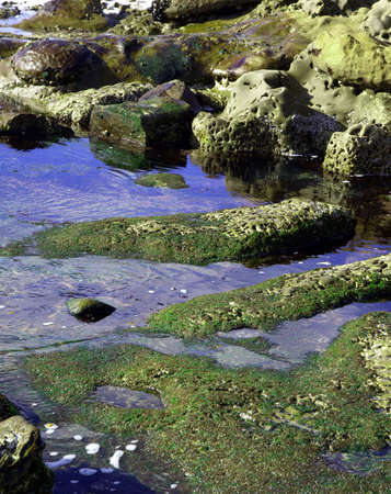 Reflections in a coastal tidepools with mossy rocks and coral