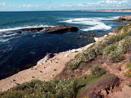 Scenic panorama of flowering hillside overlooking the pacific ocean and birds on the beach Reklamní fotografie