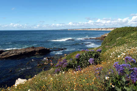 Panoramic view of spring flowers on a pacific coastal hillside Reklamní fotografie